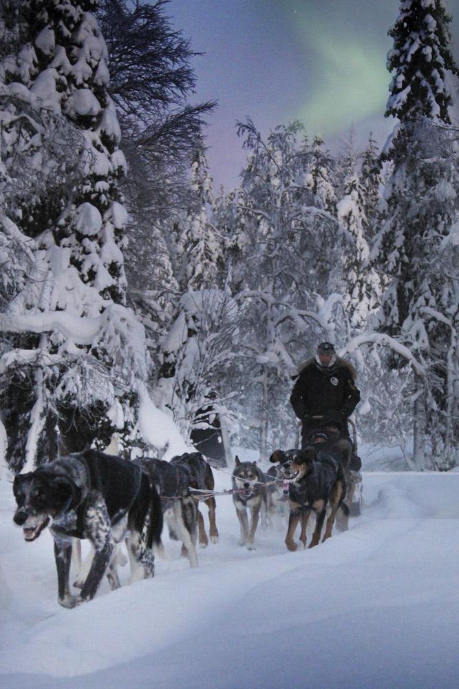 husky-valjakko